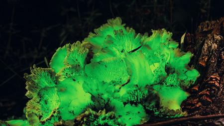 Cogumelos brilhantes