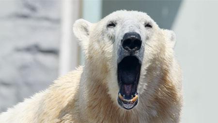 Providência de Deus durante o sono dos ursos