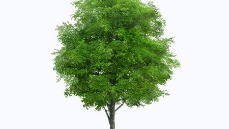 O valor das árvores