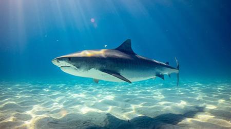 Tubarões em Israel