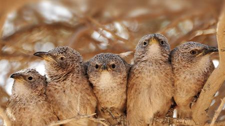 Comunicação entre aves