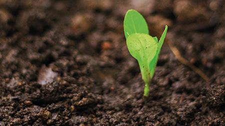 Método para plantio em solos salgados